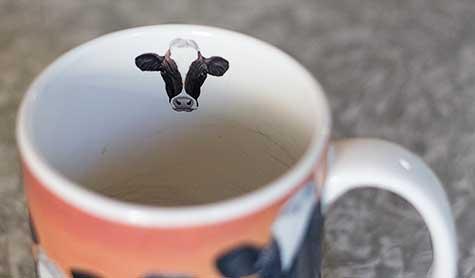 cute cow mug