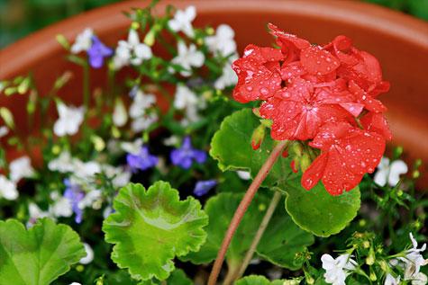 rain-flowers-1