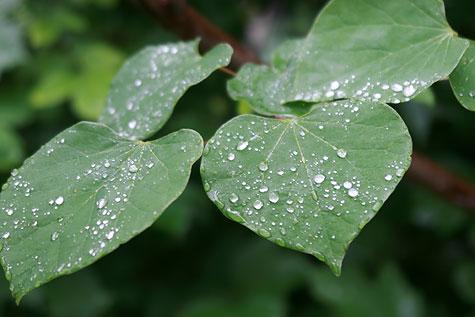 rain-flowers-2