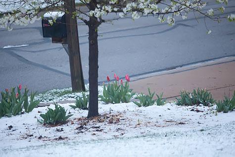 snow-frontyard