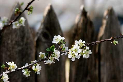 texas-blooms
