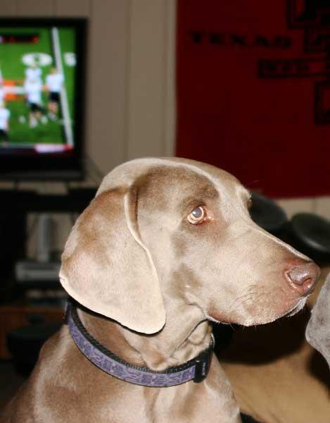 texas-dogs-3472