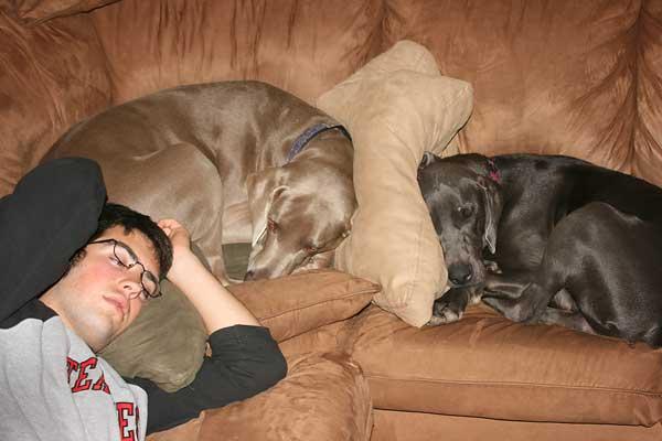 texas-dogs-3504