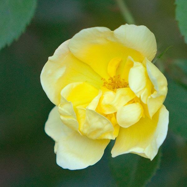 backyard-flowers-8886