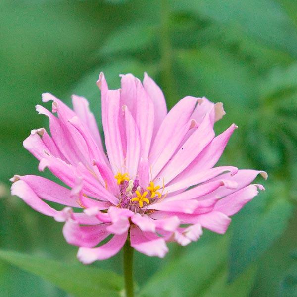 backyard-flowers-8887