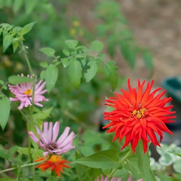 backyard-flowers-8890