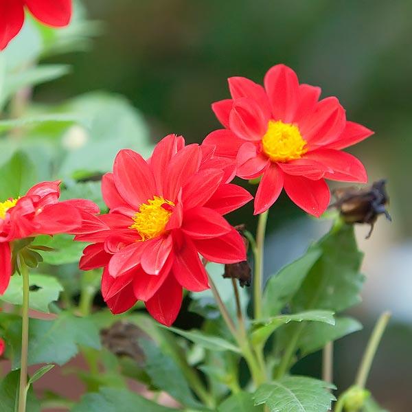 backyard-flowers-8898