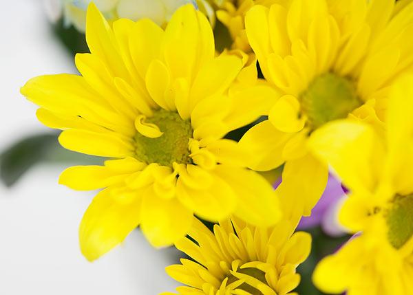 flowers-7159