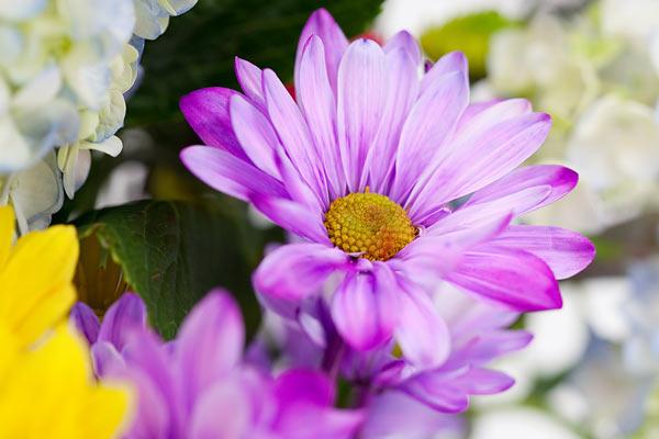 flowers-7160