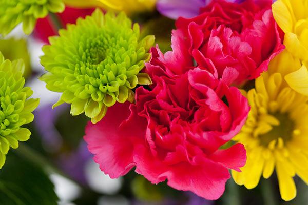 flowers-7161