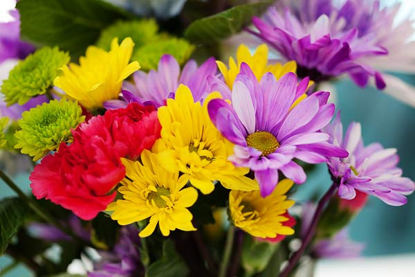 flowers-7165