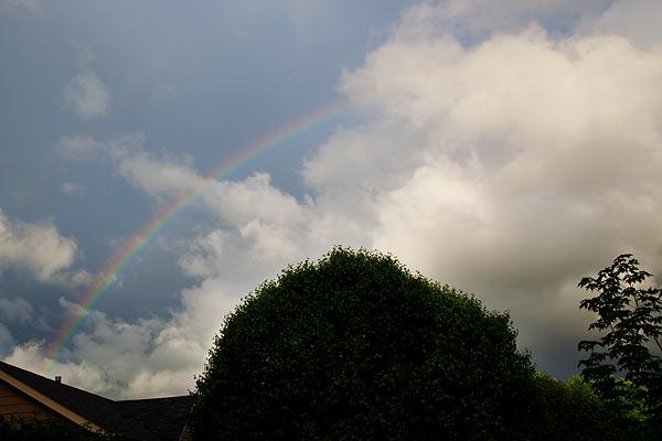 rainbow-6667