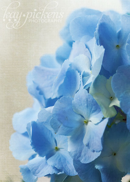 sea-of-blue-4646
