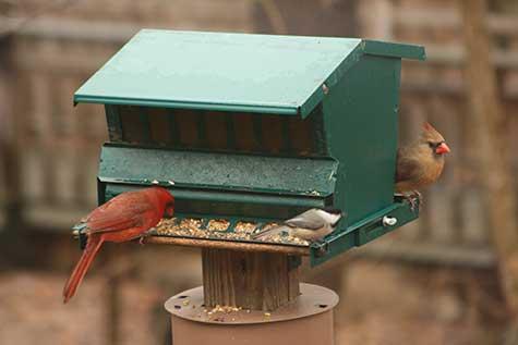 3 birds at the feeder