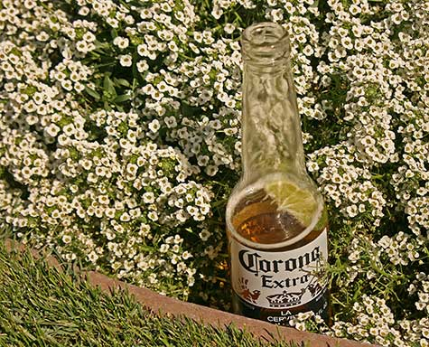 beverage among the flowers