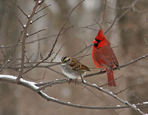Cardinal and friend