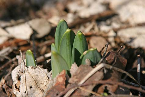 first signs of spring flowers