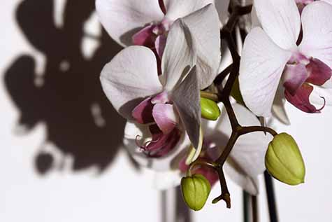 orchids and shadows