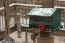 Snowatbirdfeeder