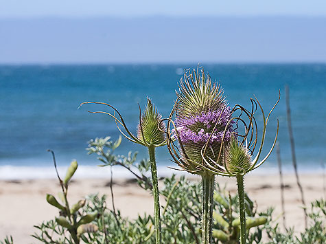 flower on coast