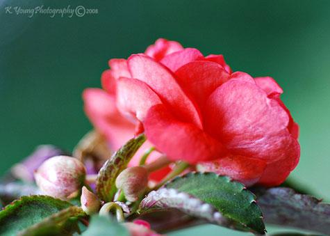 Kate's flower