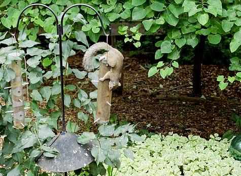 squirrel on bird feeder