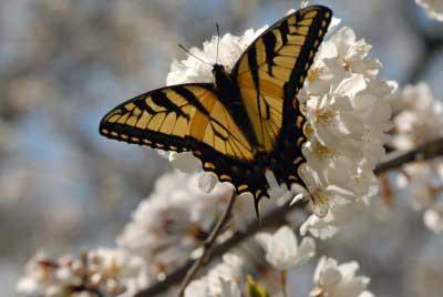 debra butterfly