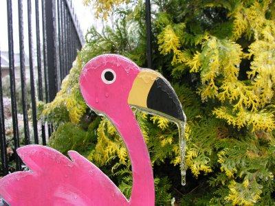 frozen flamingo