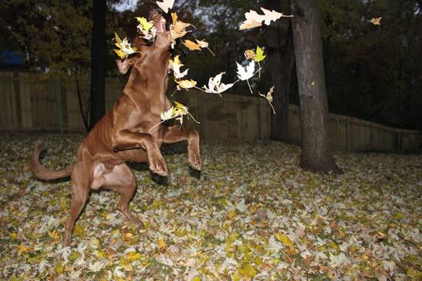 Loving the Leaves