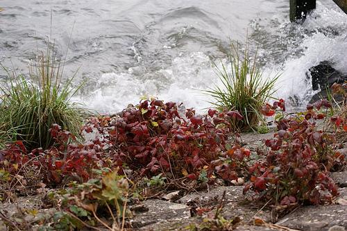 Fall Photo at the River