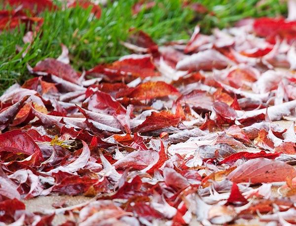 autumn-rain-2630