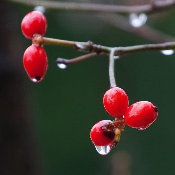 autumn-rain-2633