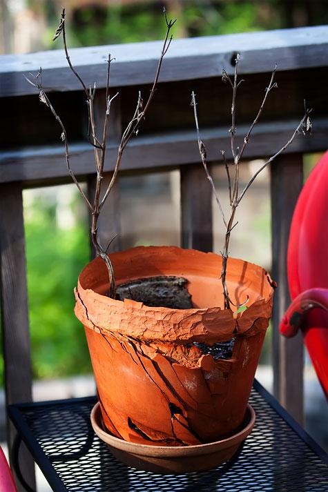 clay-flower-pot