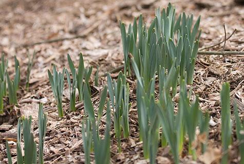 green-spring-2