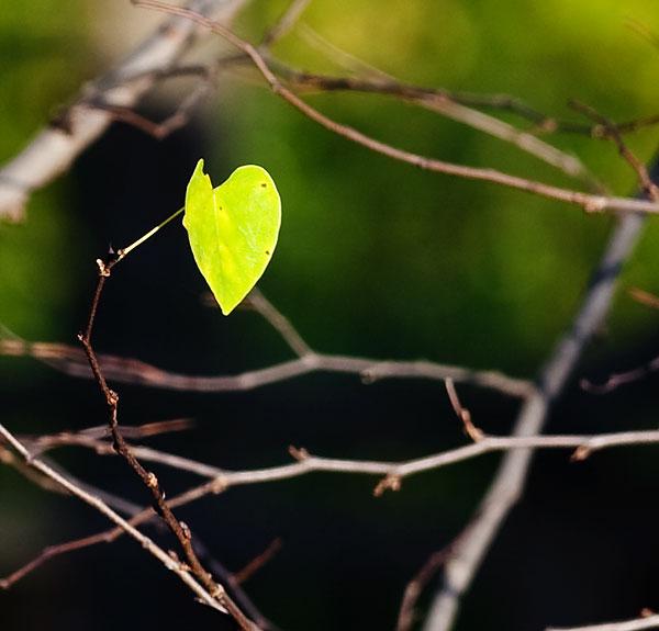 lone-leaf-2749