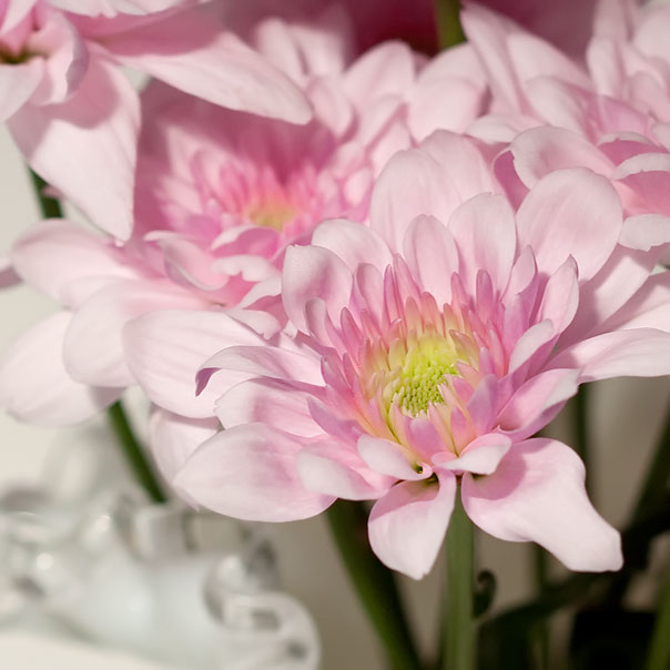 pretty-pink-flower-1909