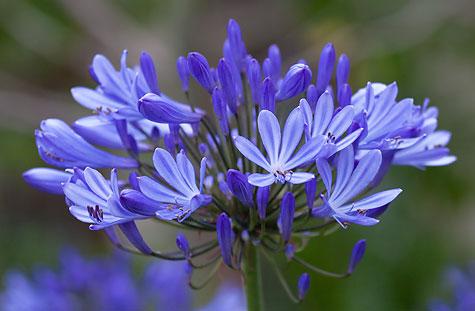 purple-flower-california-1