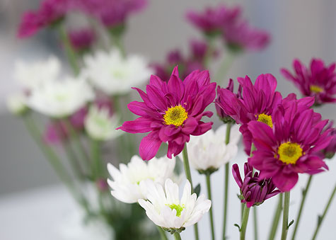 purple-flowers-4