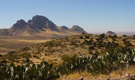cactus and views