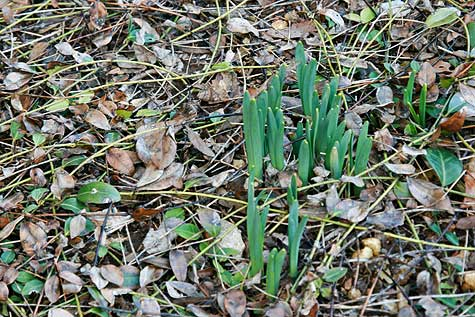 signs-of-spring