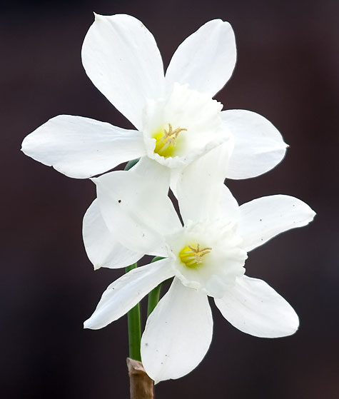 white-flower-closeup
