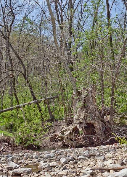 annie's tree