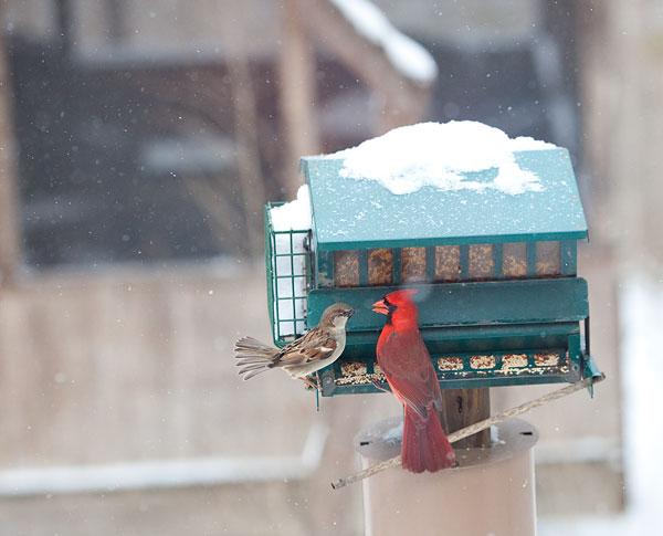 bird fights at the bird feeder