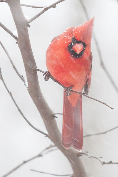 birds-in-snow-3234