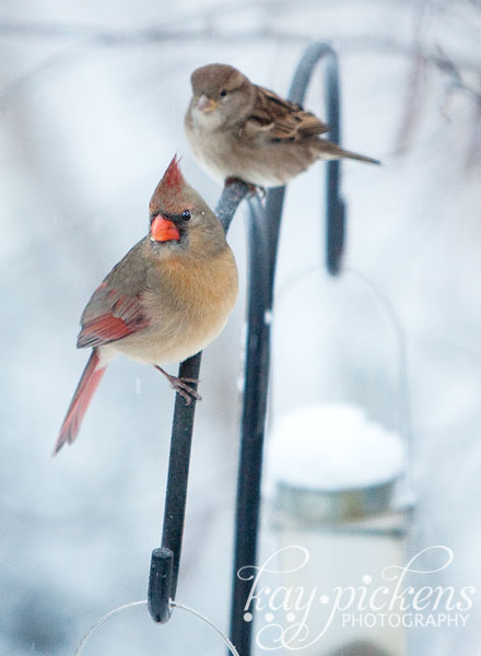 Birds on bird feeder