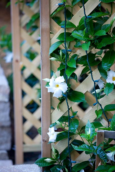 climbing-flowers-7788