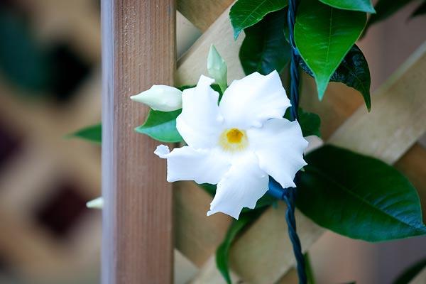 climbing-flowers-7791