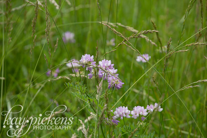 purple wild flowers