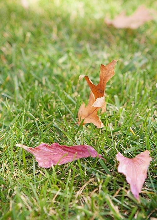 dancing-leaf-9034
