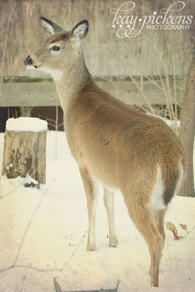 deer-in-snow-5455